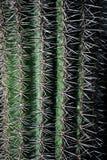 Rader av kaktusgrova spikar i ljus och skugga arkivfoto