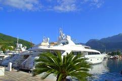 Rader av lyxiga yachter på marinaskeppsdockan Royaltyfria Bilder