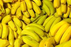 Rader av mogna gula bananer Royaltyfri Foto