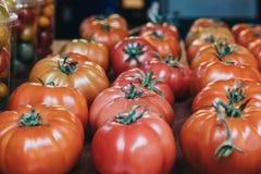 Rader av nya organiska röda tomater Arkivfoton