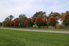 Rader av sockerlönnträd i Kansas City Royaltyfri Foto