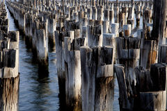 Rader av stolpar från en gammal pir Fotografering för Bildbyråer