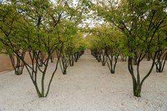 Rader av träd i Vaduz Royaltyfria Bilder
