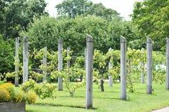 Rader av trädgårds- tråd Arkivfoto