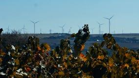 Rader av vingård- och vindturbiner lager videofilmer