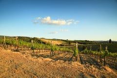 Rader av vingårdar i Tuscany Slight blur i löpare för att visa rörelse Royaltyfria Bilder