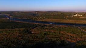 Rader av vingården, innan att skörda, surrsikt Royaltyfri Fotografi