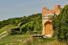Rader av vinrankor framme av vingården Arkivfoton