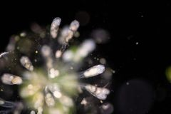 Raderdiertje onder de microscoop royalty-vrije stock fotografie