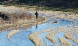 Radfahren auf Francigena-Weg Lizenzfreies Stockbild