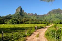 Radfahren auf tropisches Moorea lizenzfreie stockbilder