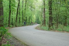 Radfahren durch den Wald Lizenzfreie Stockfotos