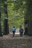 Radfahren in Herbstwald stockfoto