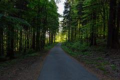 Radfahren in Natur-Wald an einem regnerischen Tag Straße in der Waldnatur Grüner Forest Road nave Straße Natürliche Umgebung lizenzfreie stockbilder