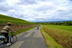 Radfahren in Weinberge Lizenzfreies Stockfoto