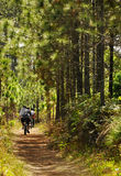 Radfahrer, die in den Wald radfahren Stockbild