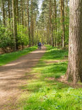 Radfahrer, die entlang den Weg zwischen hohe Bäume beim Sandrin reiten Lizenzfreie Stockfotografie