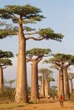 Radfahrer durch die Gasse von Baobab stockfotografie