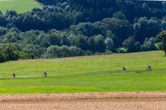 Radfahrer in einer Abstandsansicht an einem sonnigen Tag des Sommers Lizenzfreie Stockfotografie