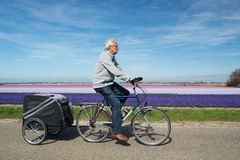 Radfahrer in Holland lizenzfreie stockbilder