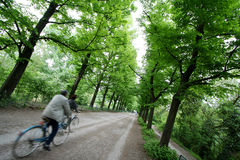 Radfahrer im Grün Lizenzfreies Stockbild