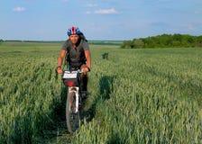 Radfahrerreiten auf einem Feld des grünen Weizens Stockfoto