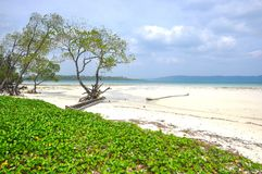 Radhanagar-Strand, Havelock-Insel stockfoto