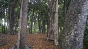 Radhanagar-Strandwald stockfoto