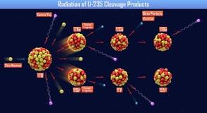 Radiación de los productos de hendidura U-235 Foto de archivo libre de regalías