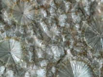 Radial aggregates of pearly wavellite crystal stock photo