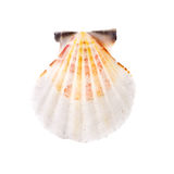 Radial Seashell Stock Photo