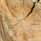 A radial section of a tree trunk. Background image.The view from the top.n Royalty Free Stock Images