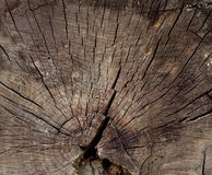 A radial section of a tree trunk. Royalty Free Stock Photography