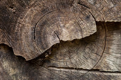 A radial section of a tree trunk. Royalty Free Stock Photos