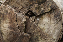 A radial section of a tree trunk. Stock Photography