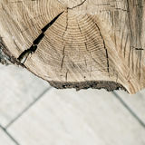 A radial section of a tree trunk. Royalty Free Stock Images