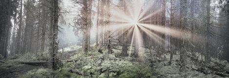 Radiance misty forest Royalty Free Stock Photos