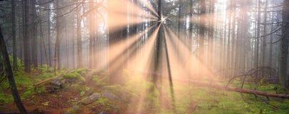 Radiance misty forest Stock Photo