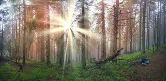 Radiance misty forest Stock Image