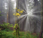 Radiance misty forest Royalty Free Stock Photo