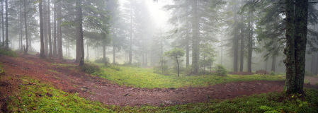 Radiance misty forest Royalty Free Stock Images