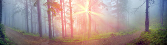 Radiance misty forest Royalty Free Stock Image