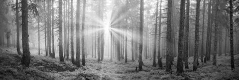 Radiance misty forest Stock Photography