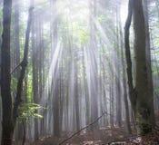 Radiance misty forest Stock Photos
