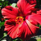 Radiant Flower Royalty Free Stock Images