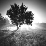 Radiant morning. Monochrome colors Royalty Free Stock Image