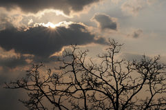 Radiant sun, heavy clouds, tree silhouette Royalty Free Stock Photos