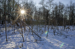 The radiant sun in the winter. The radiant sun lights the abandoned winter park in the old noble estate Stock Image