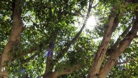 Radiant sunlight breaking through trees