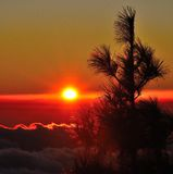 Radiant sunrise with silhouette of canarian pine in foreground, Gran canaria, Canary islands. Bright sunrise from Gran canaria Royalty Free Stock Photos